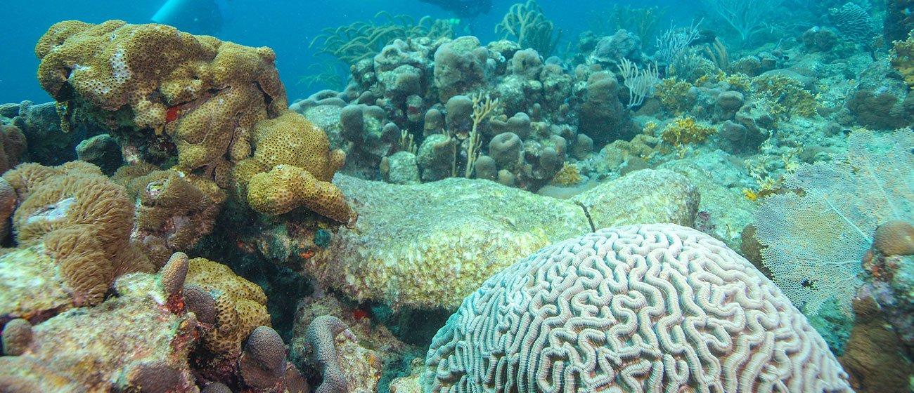 coral-reefs-in-Tobago